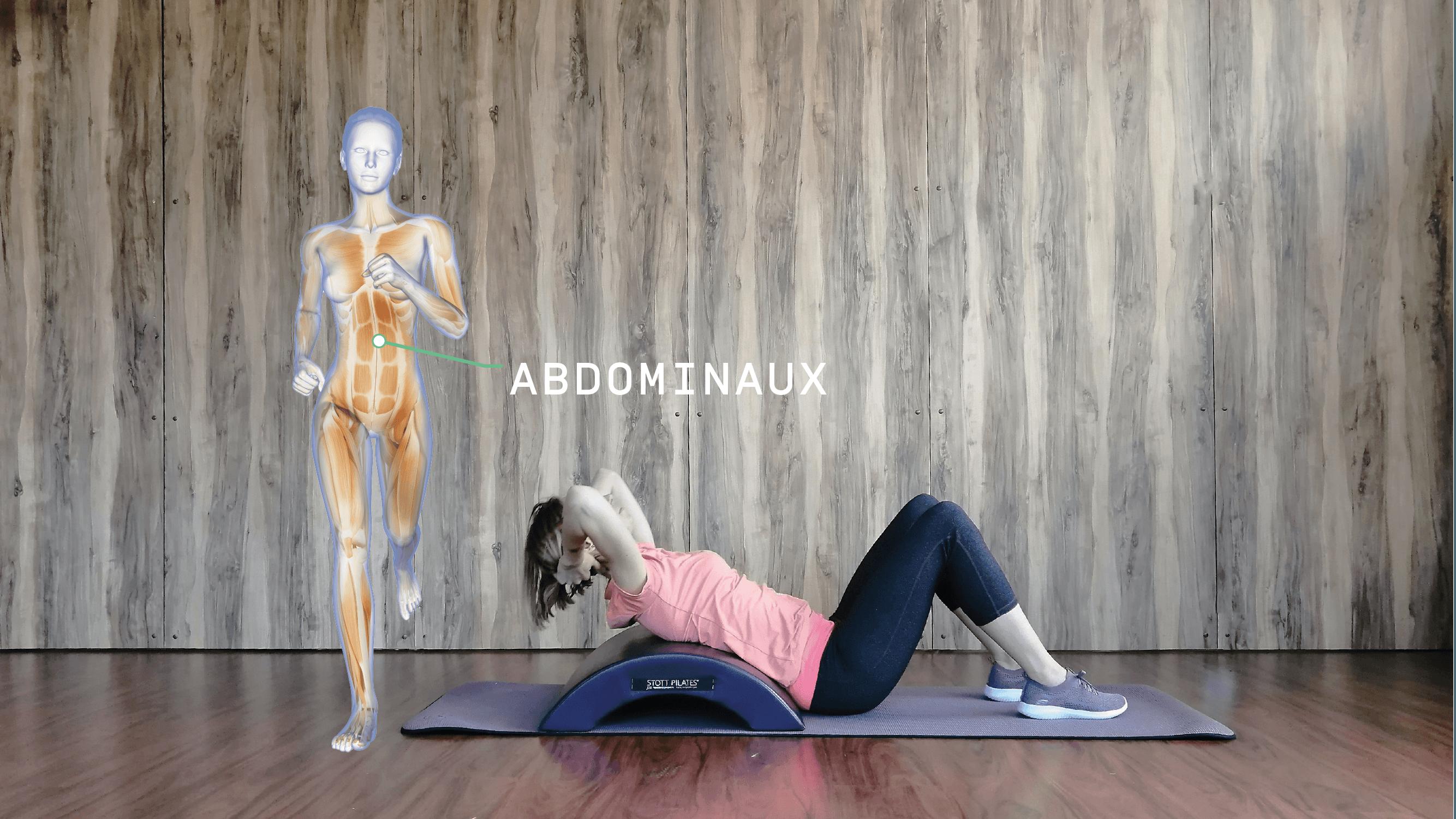 Anatomie Enmouvement - Abdominaux