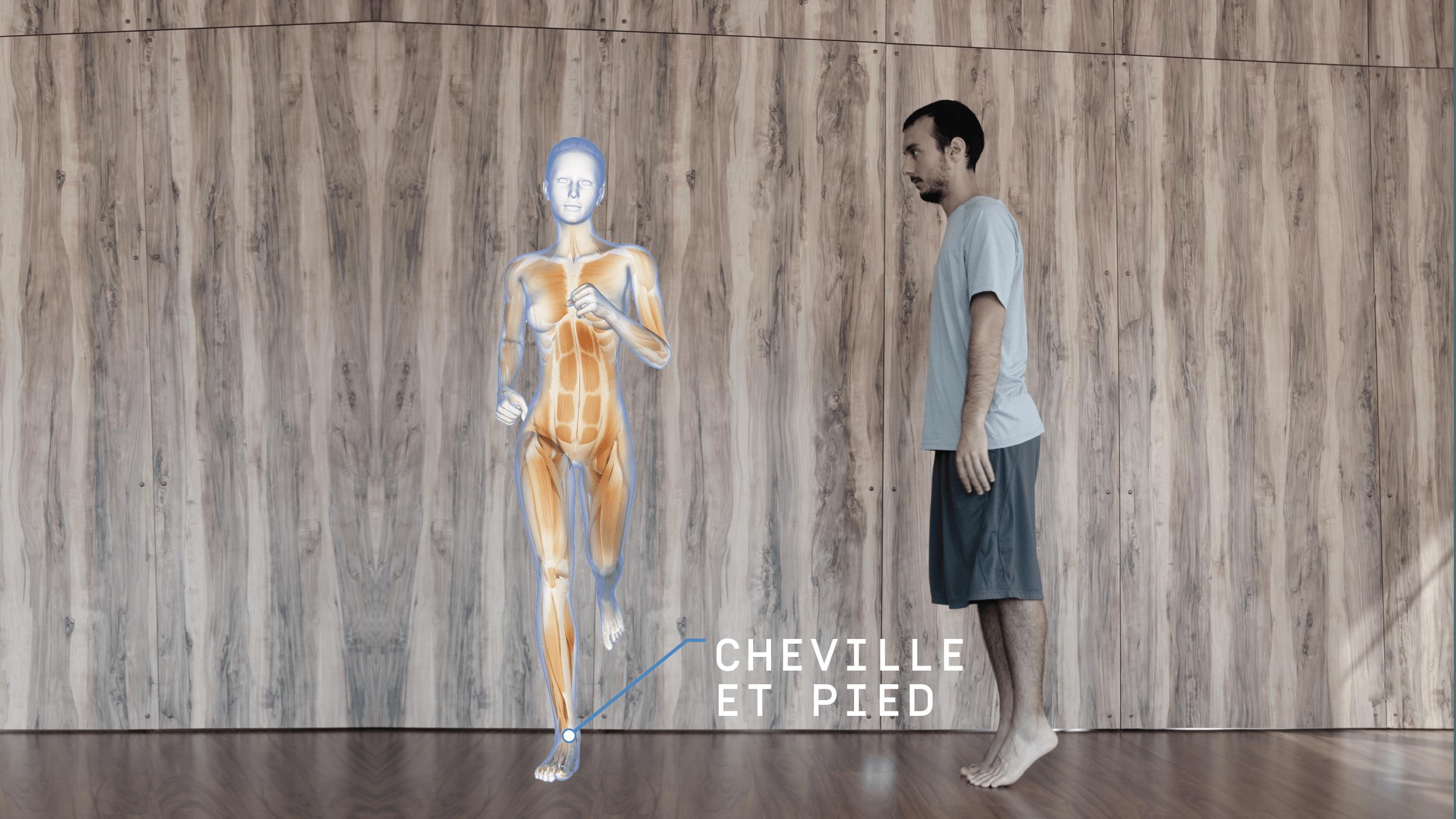 Anatomie Enmouvement - Cheville et pied