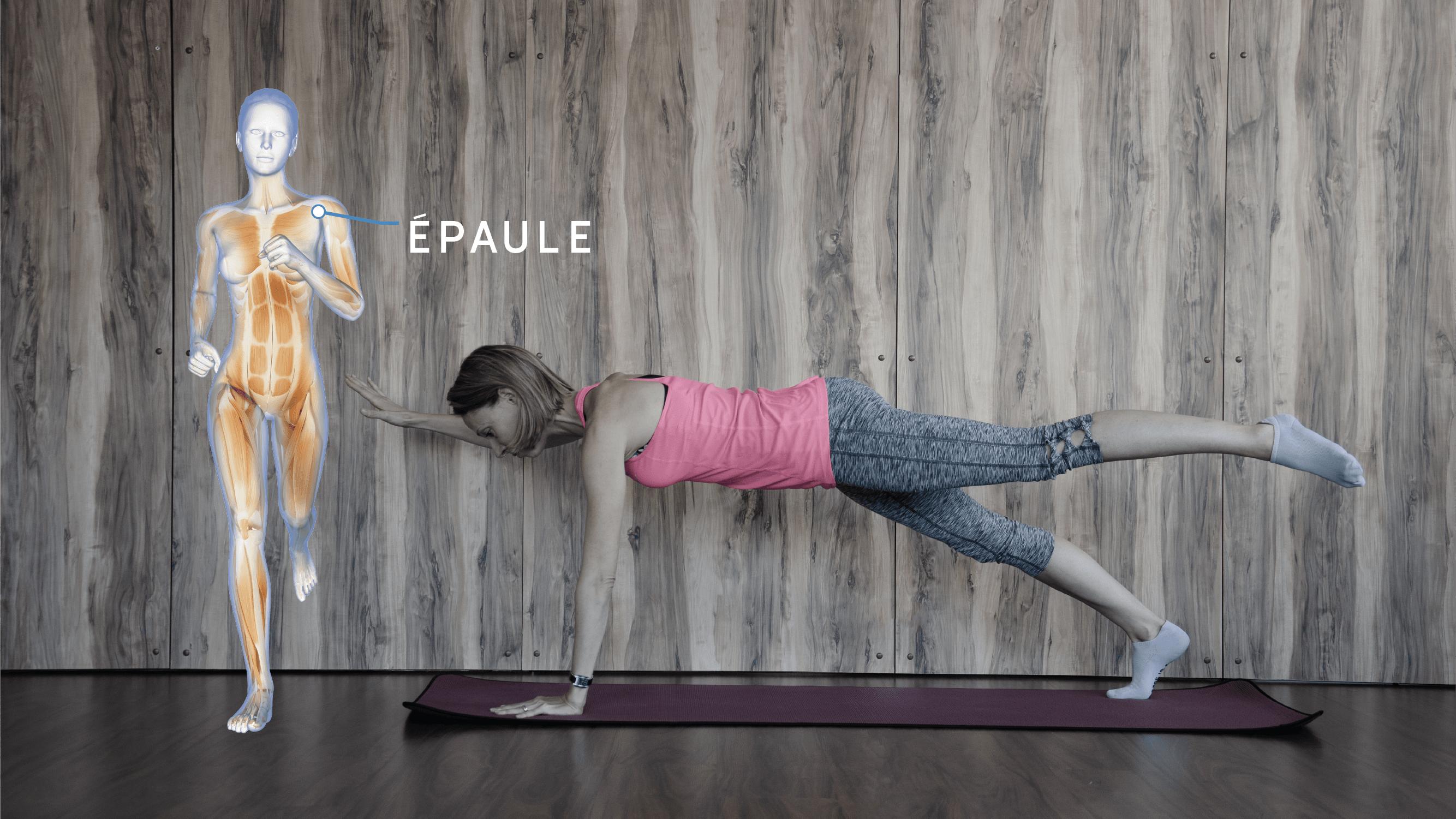 Anatomie Enmouvement - Épaule