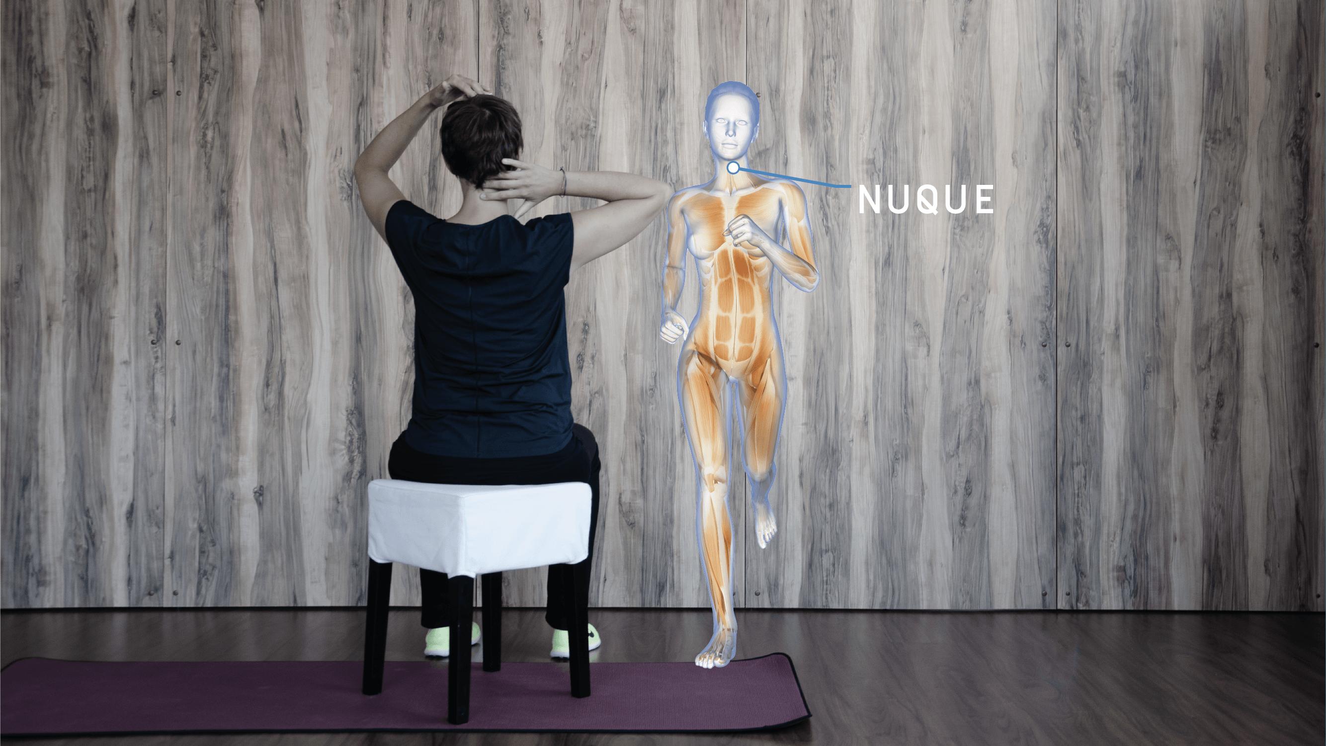 Anatomie Enmouvement - Nuque