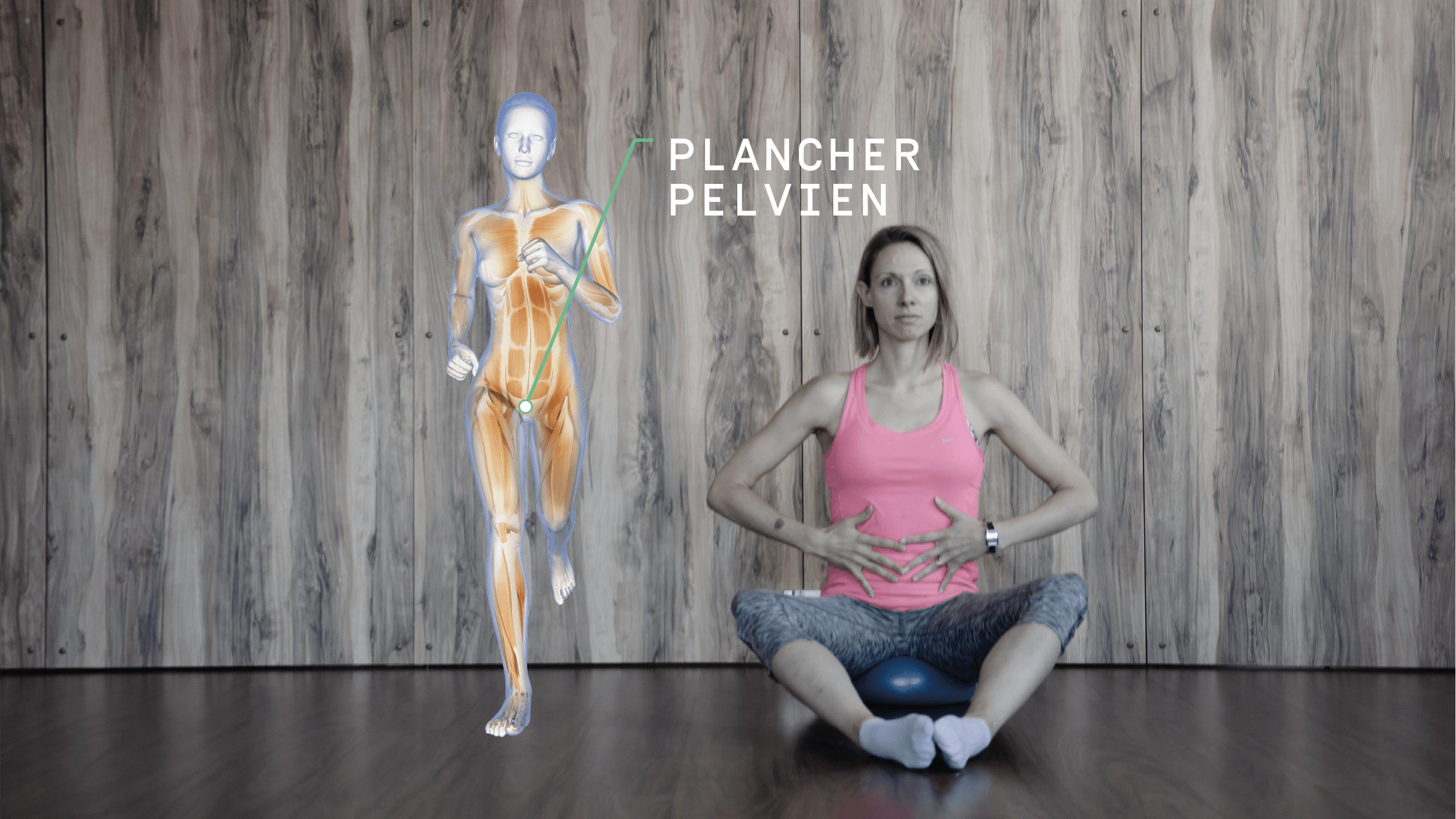 Anatomie Enmouvement - Plancher Pelvien